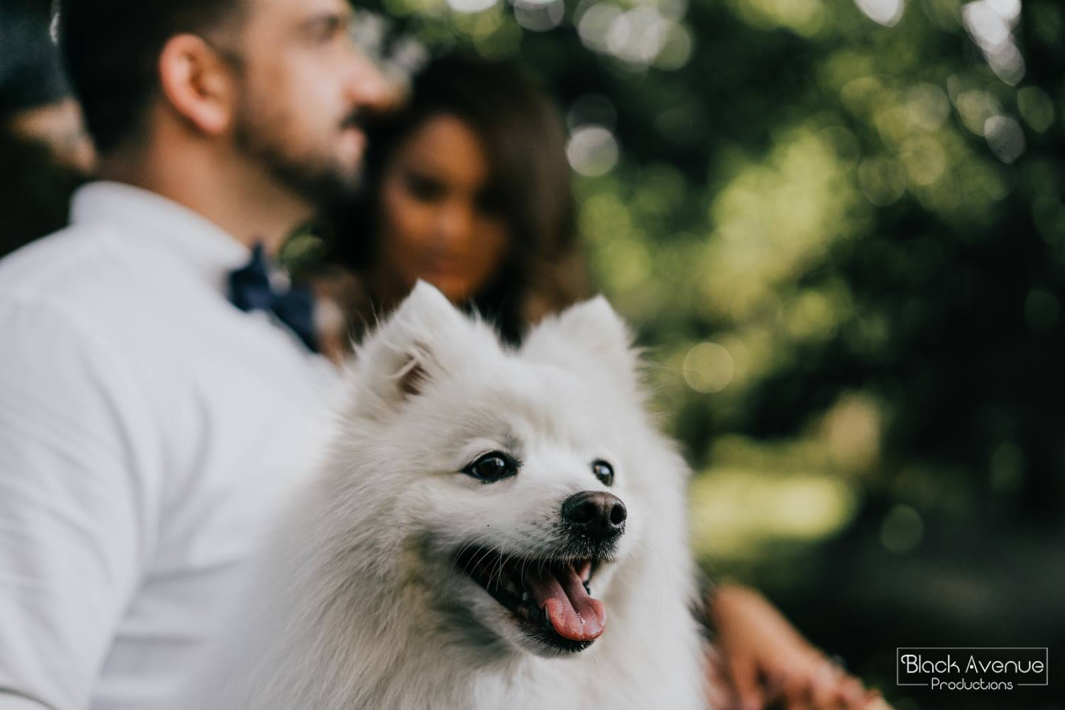 A white fluffy dog photo bomb an engaged couple during engagement photography session and looks very cute