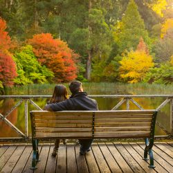 romantic engagement photo of couple sitting by the bench looking at the fallen leave 2017